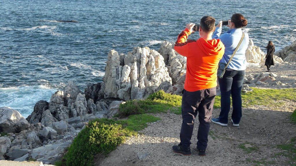 Hermanus+photographing+whale