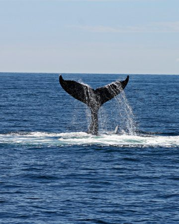 Whales, Penguins & Wine Tour